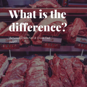 The difference between grass-fed & grain-fed beef